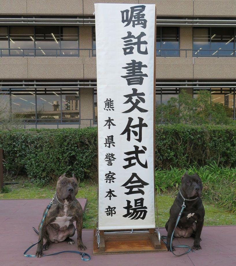 日本 ピットブル 飼い主が制御できなくなったピットブルに襲われる男性の映像に恐怖
